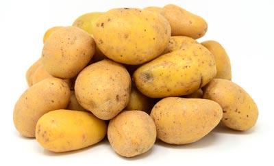 Heide-Zwiebel Klein Süstedt - Uelzen - Kartoffeln